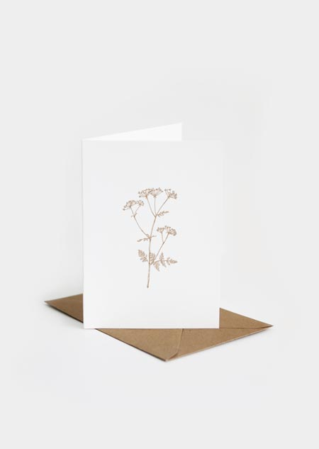 Cow parsley (greeting card)