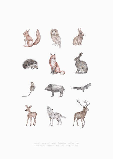 Animals poster of 12