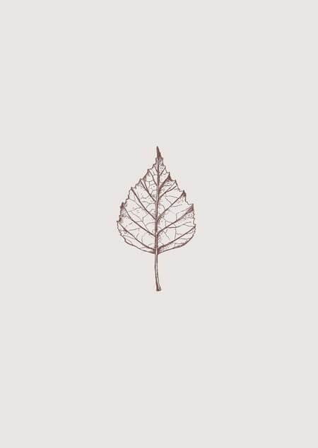 Berken blad