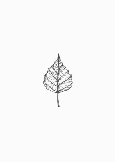 Birch leaf (black-white)