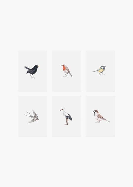 Birds set of 6