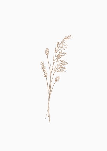 Droogbloemen (natural)