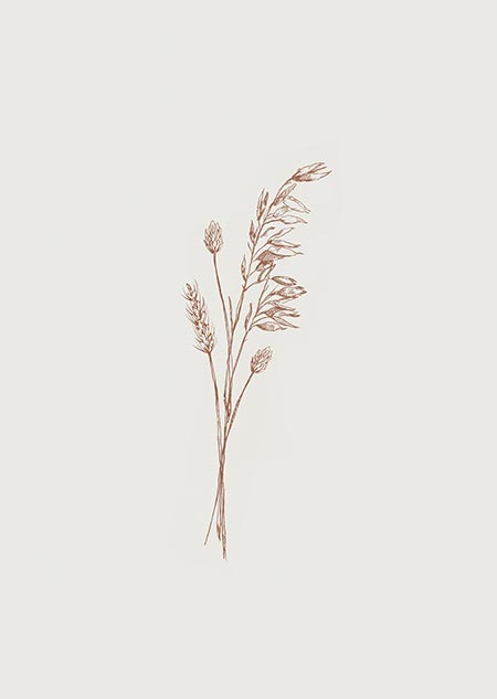Dried flowers (beige)