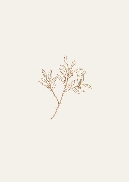 Eucalyptus - II