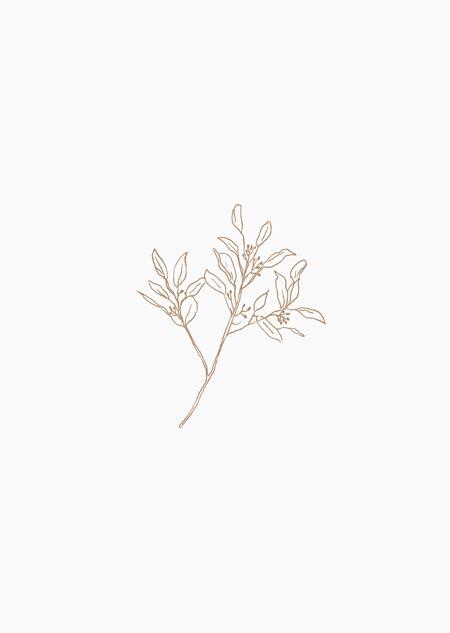 Eucalyptus (natural)