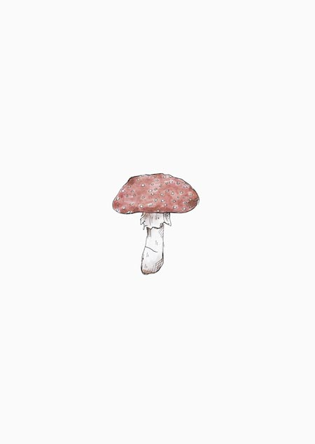 Fly agaric (color)