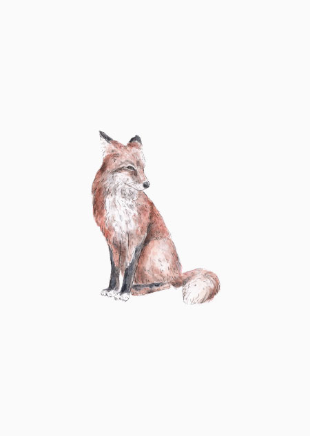 Fox (color)