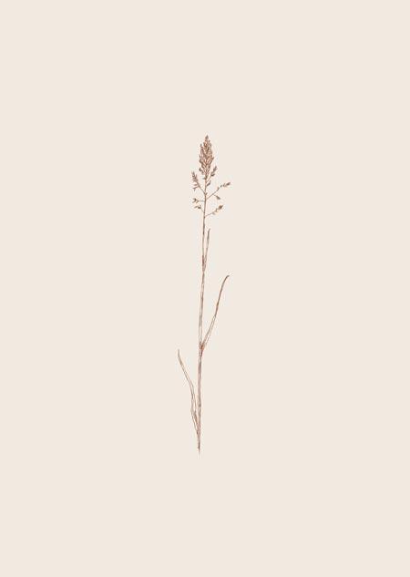 Grasje (beige)