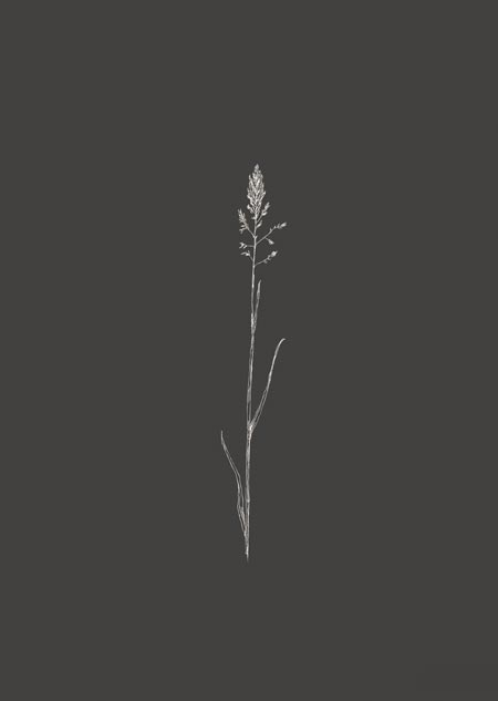 Grasje (donkergrijs)
