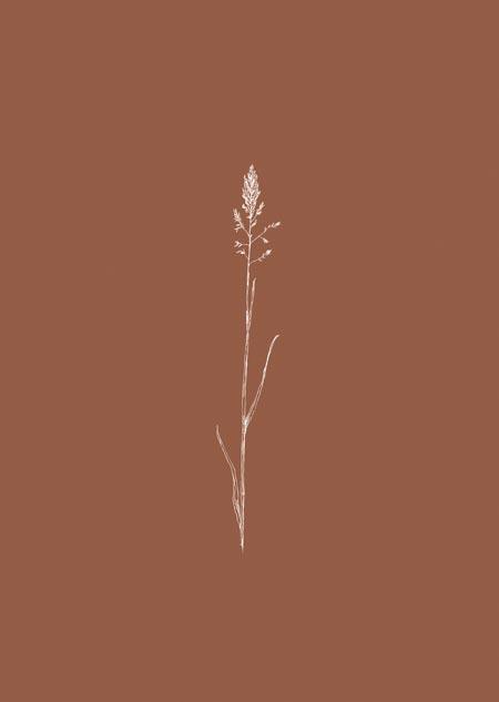 Gras (2) - terracotta