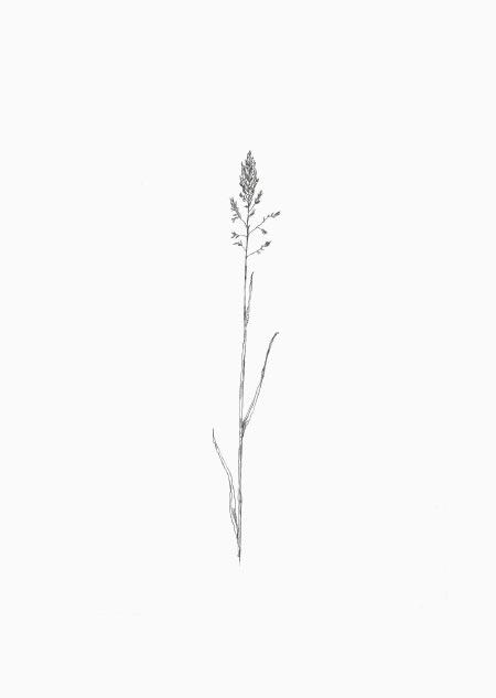 Gras (2)