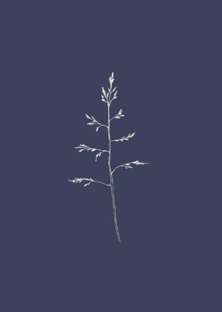 Gras (blauw)