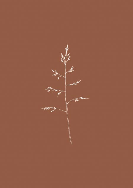 Grass (brown)