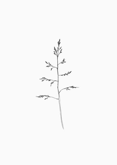 Gras (zwart-wit)