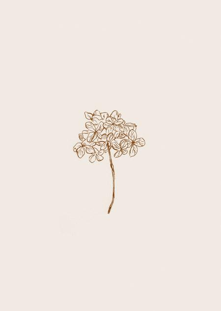 Hydrangea (beige)