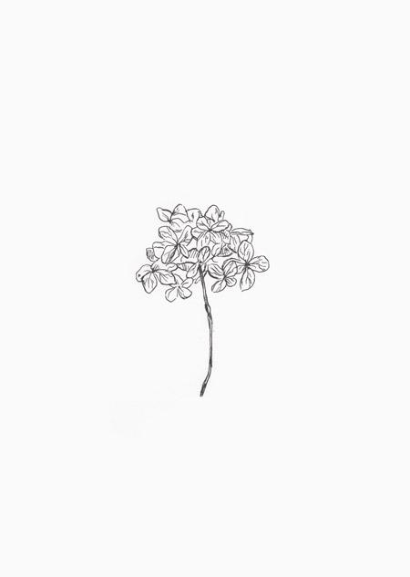 Hydrangea (zwart-wit)