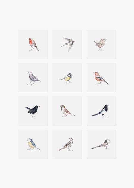 Vogel set van 12