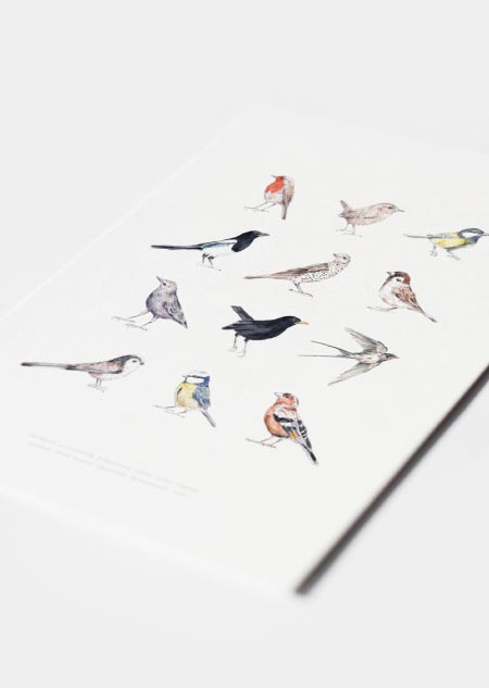 Birds poster of 12