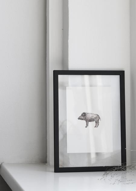 Everzwijn