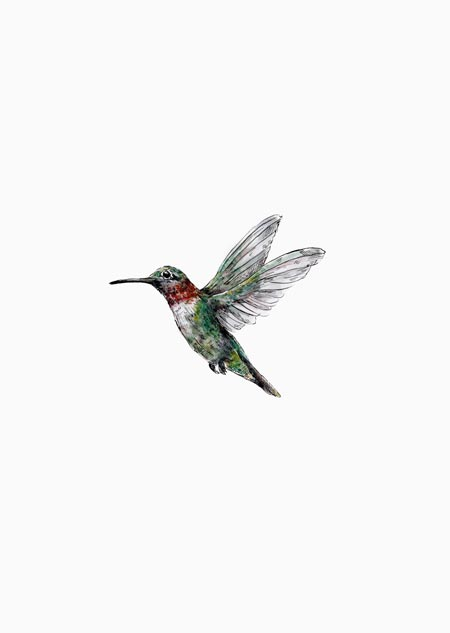 Hummingbird (color)