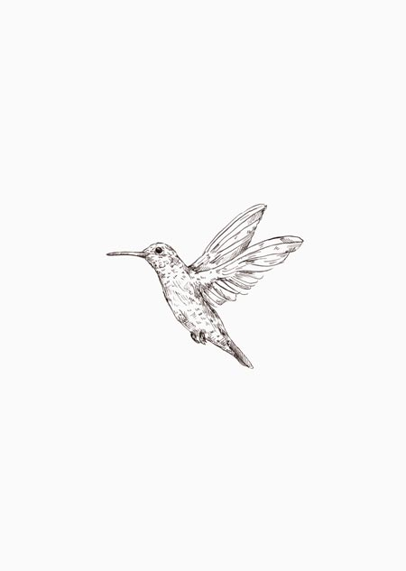 Hummingbird (black-white)