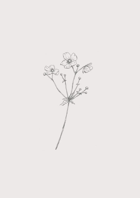 Japanse anemoon