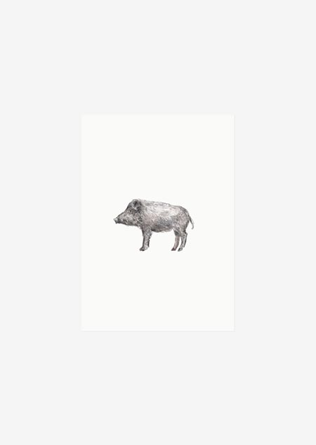 Label - 10x boar