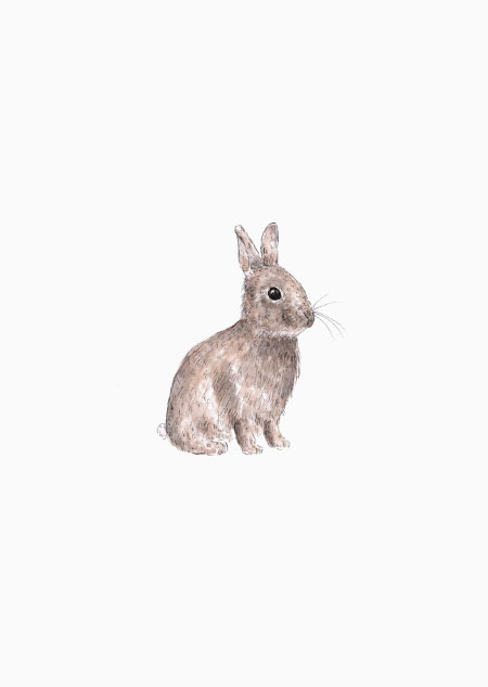 Rabbit (color)