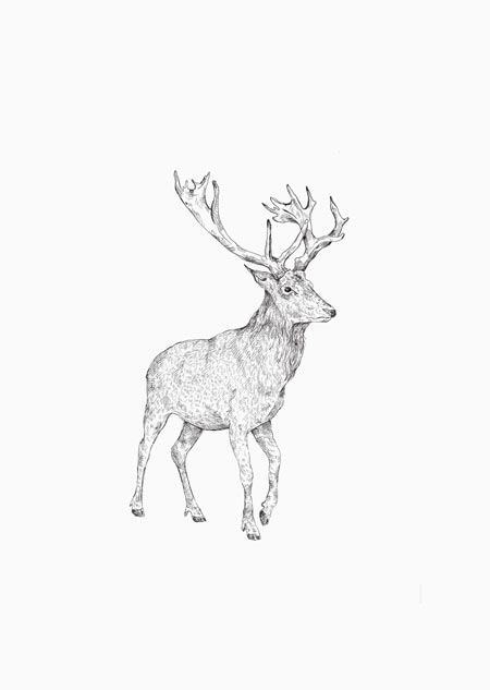 Red deer (black-white)