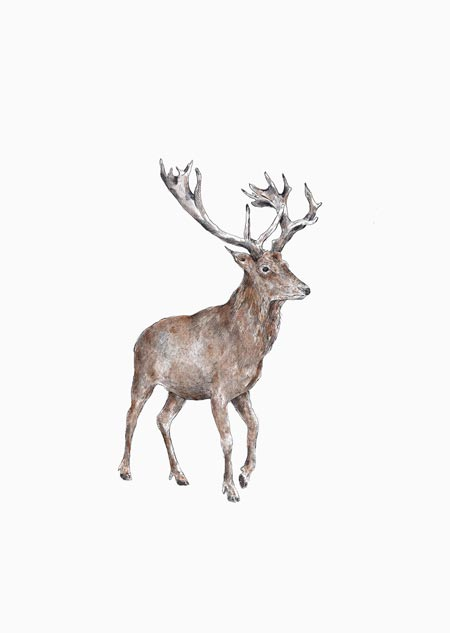 Red deer (color)