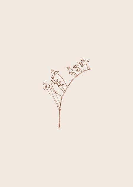 Rozenbottel (beige)