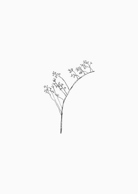 Rozenbottel (zwart-wit)