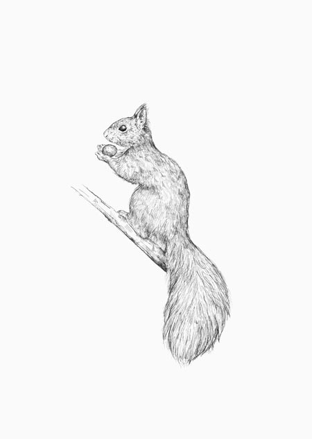 Squirrel (black-white)