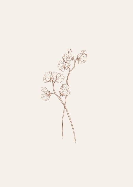 Lathyrus (bruin)
