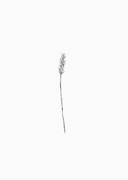 Wheat (black-white)